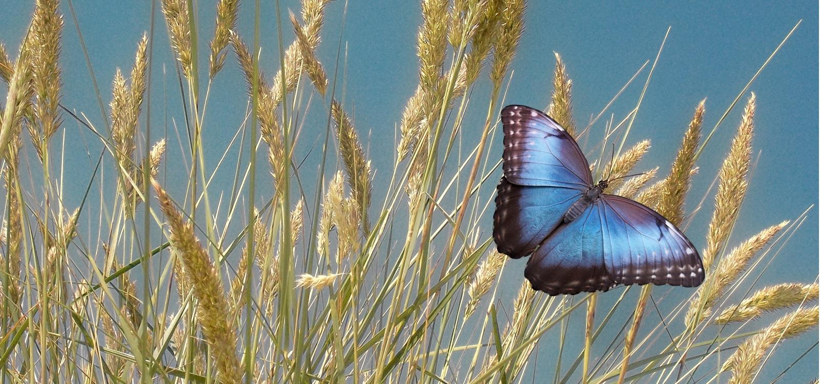 context-vlinder
